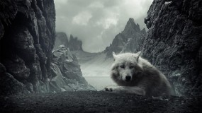 Обои Белый волк: Горы, Волк, Белый, Волки