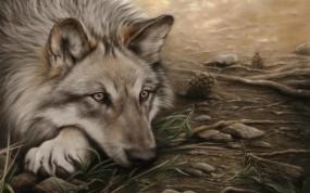 Обои Волк-одиночка: Волк, одиночка, Волки