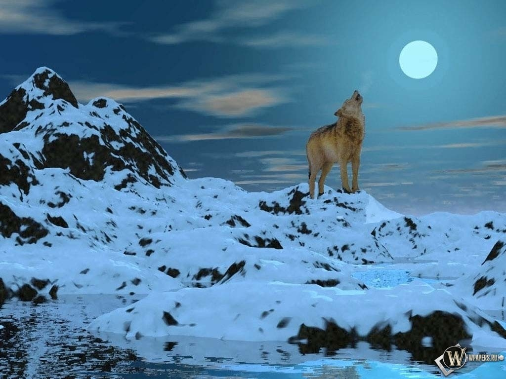 Белый волк при луне 1024x768