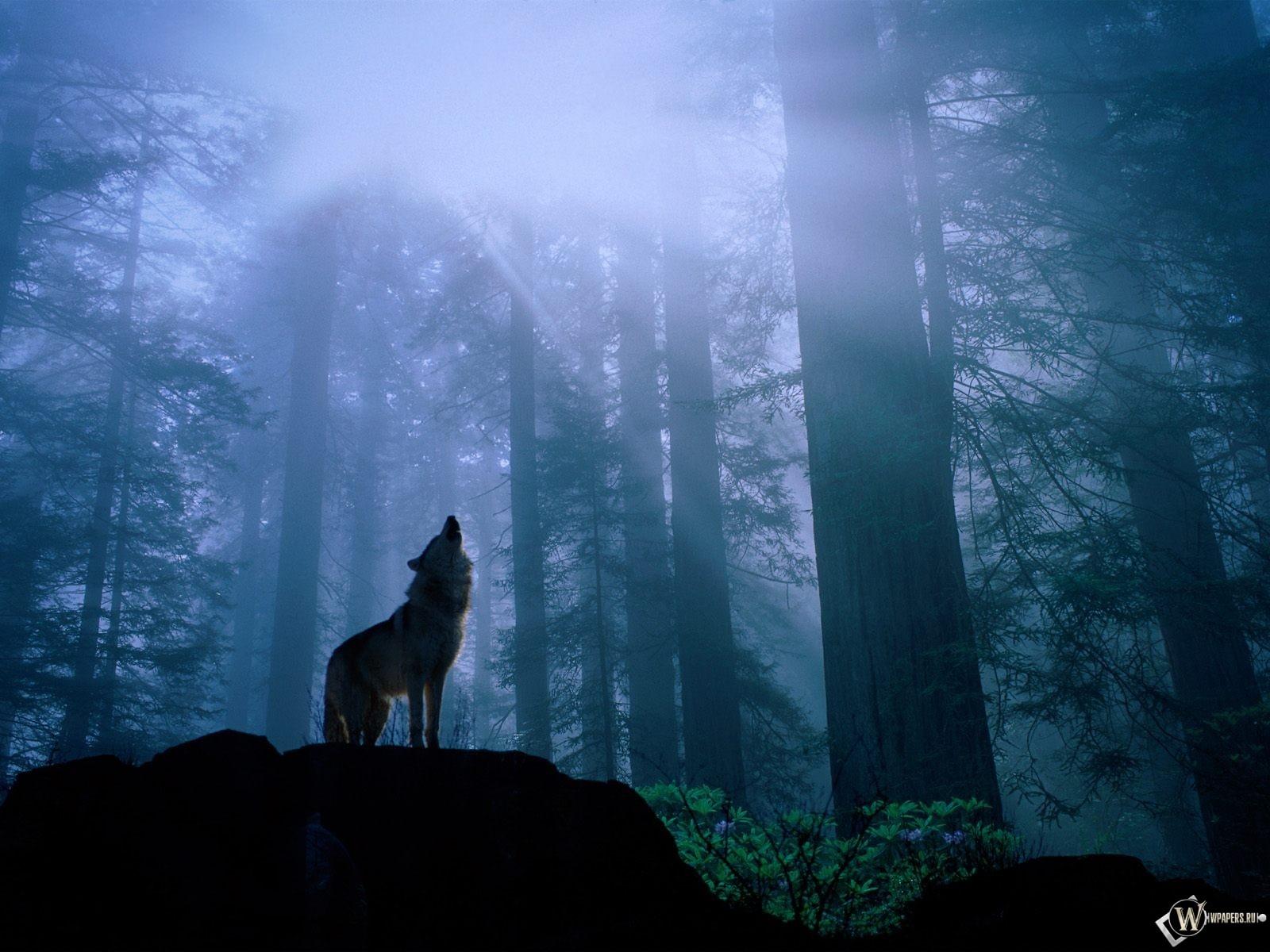 Волк воет 1600x1200