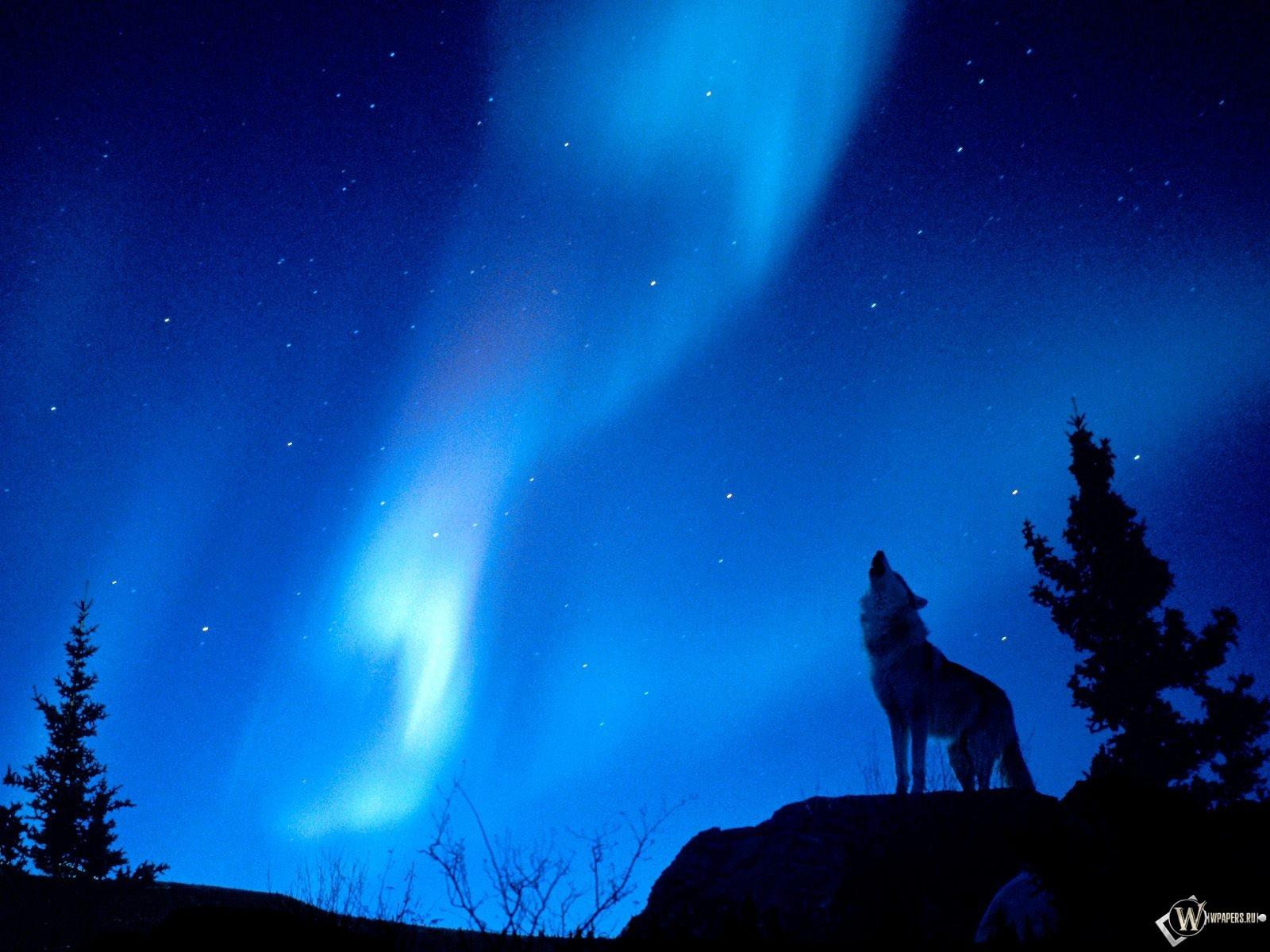 Одинокий волк 1600x1200