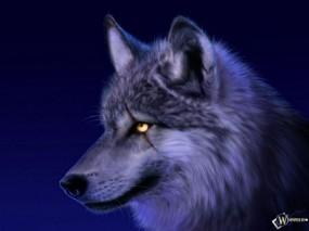 Обои Сверепый волк: Взгляд, Волк, Голова, Волки