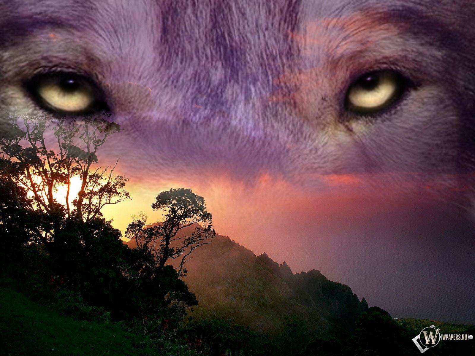 Волчий взгляд 1600x1200