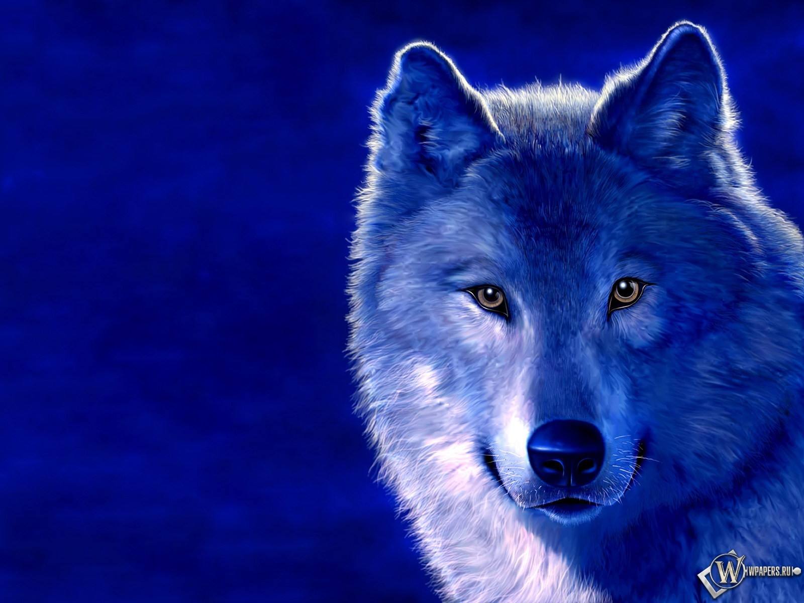 Волк на голубом фоне 1600x1200