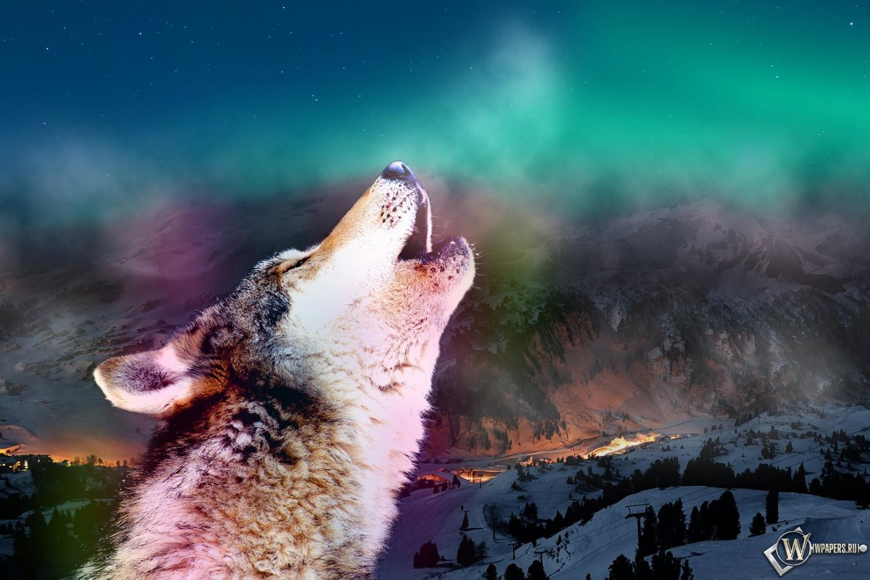 Фото воющий волк