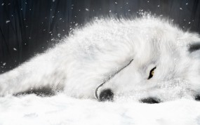 Волк отдыхает