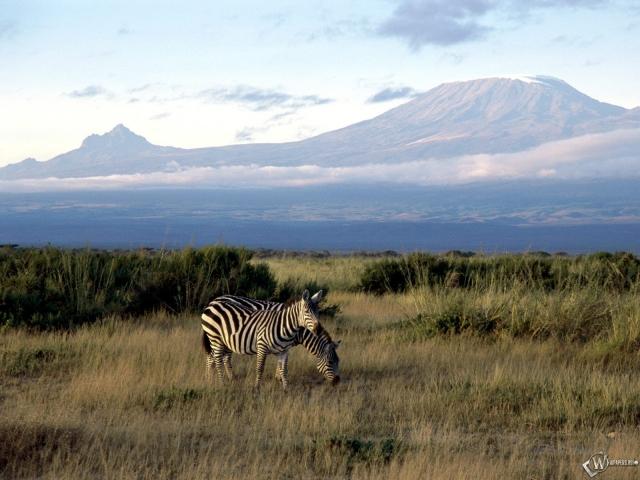 Две зебры в горах
