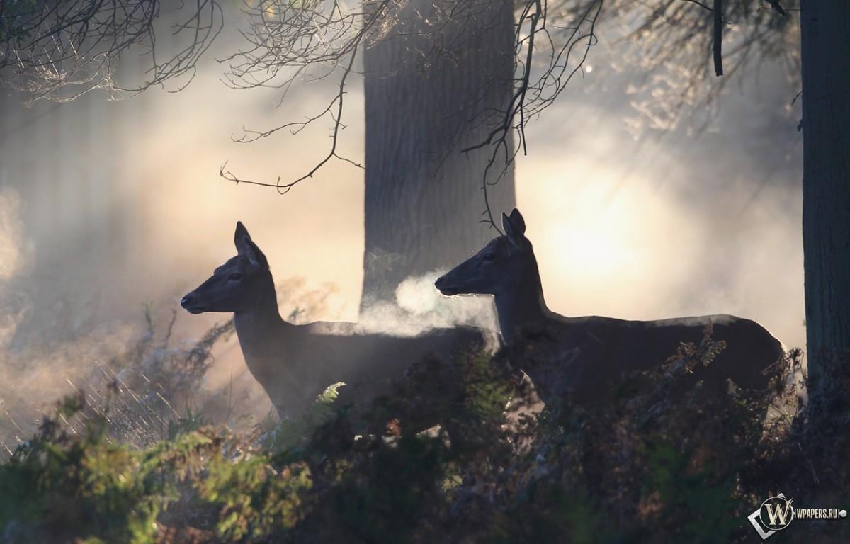 Олени в лесу 1200x768