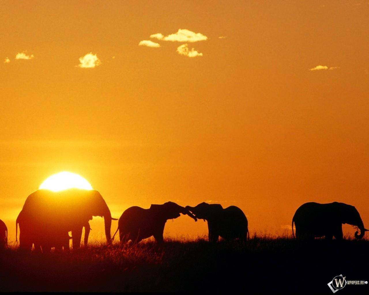 Слоны на закате 1280x1024