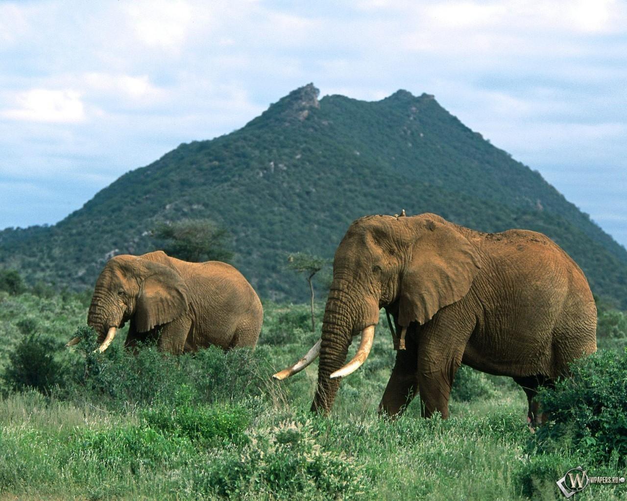 Слоны в травке 1280x1024
