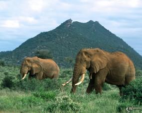 Обои Слоны в травке: Слоны, Прочие животные