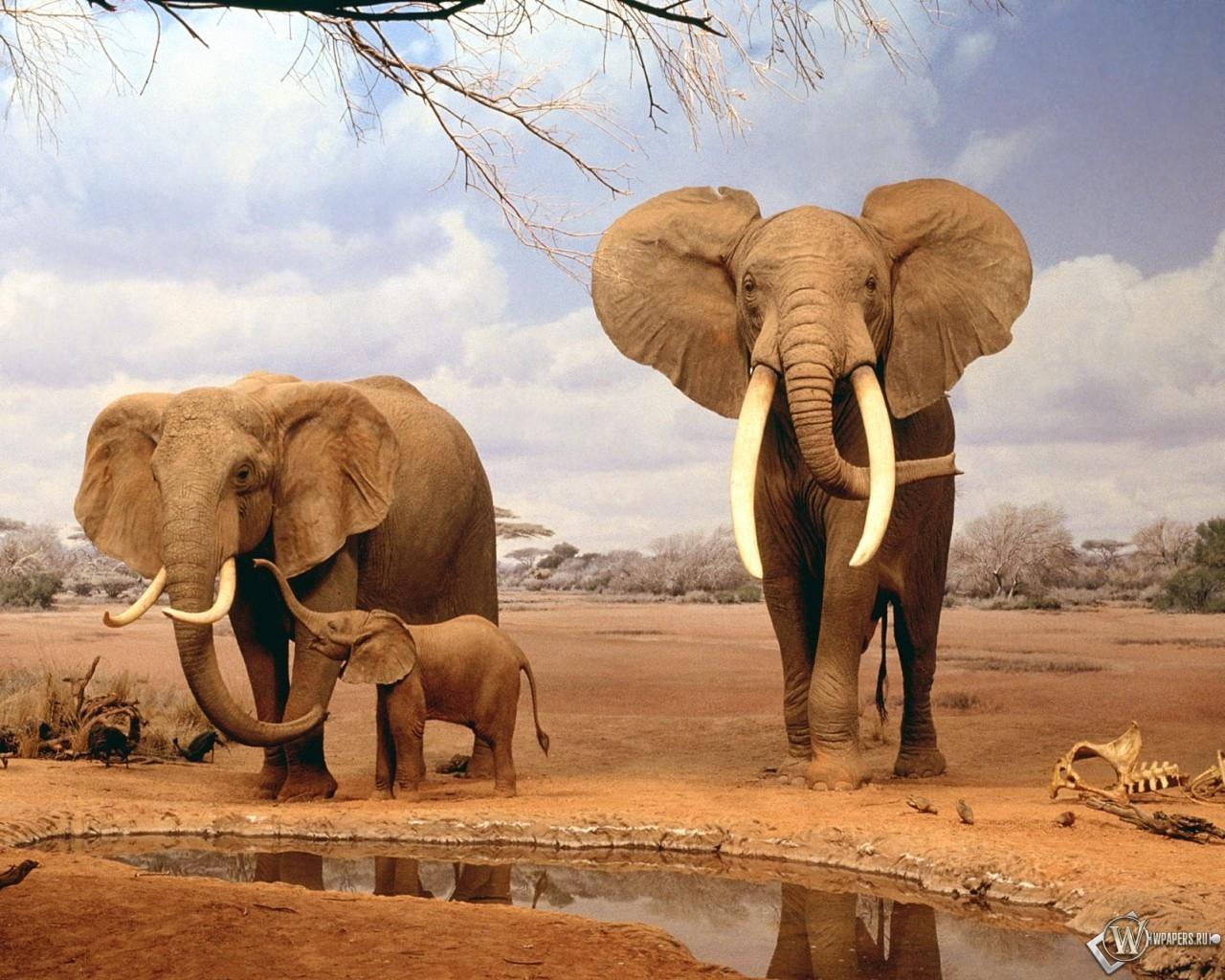 Слоны на водопое 1280x1024