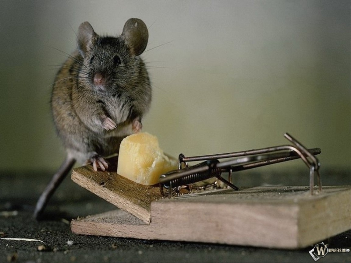 Сыр и мышь 1152x864