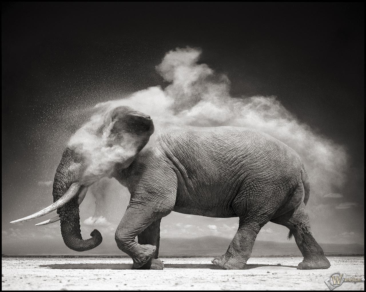Слон 1280x1024