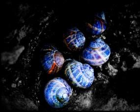 Обои Синие улитки: Цвета, Улитки, Краски, Прочие животные