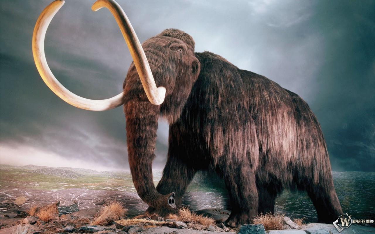 «Дерьмо мамонта» не тонет