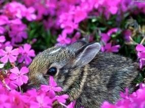 Зайчик в цветах