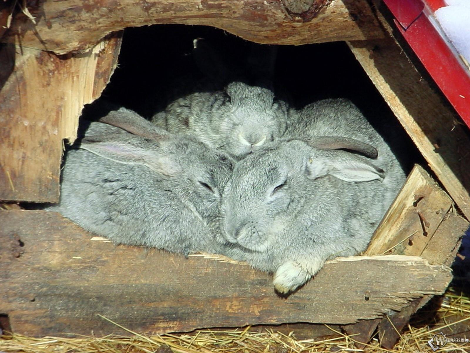 Крольчата в дупле 1600x1200