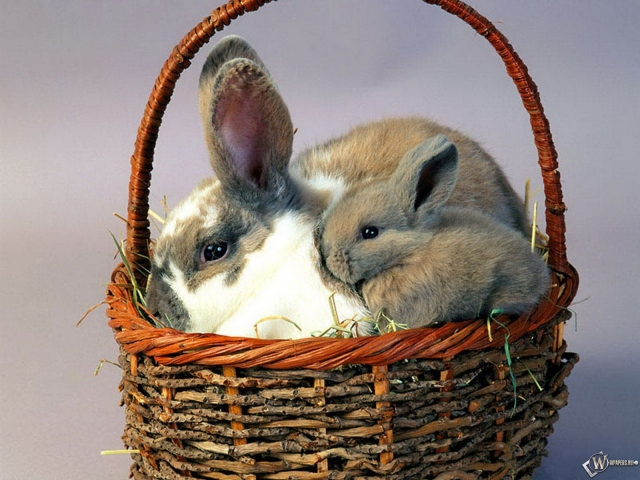 С крольчонком в корзине