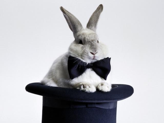 Кролик в шляпе