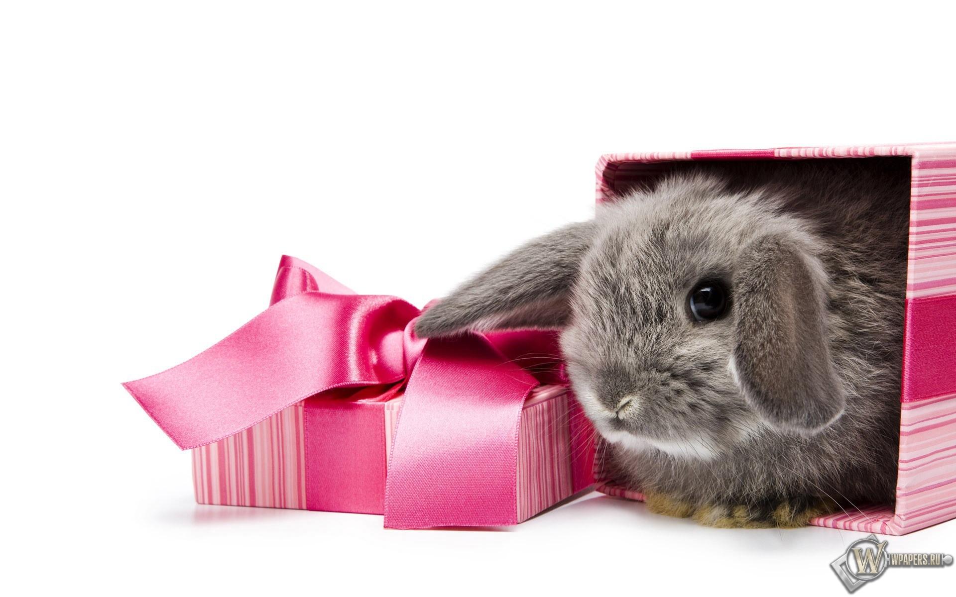 Подарочный кролик 1920x1200