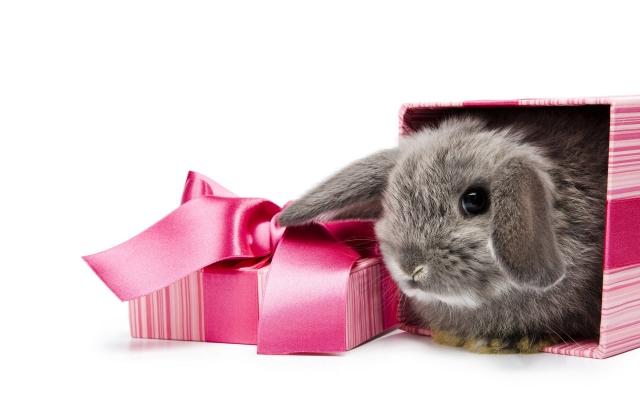 Подарочный кролик