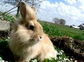 Заяц на лугу