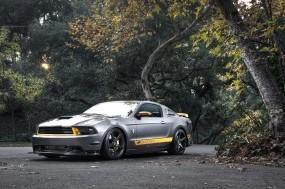 Обои MUSTANG GT 500: Деревья, Асфальт, Ford Mustang, Тюнинг, Ford