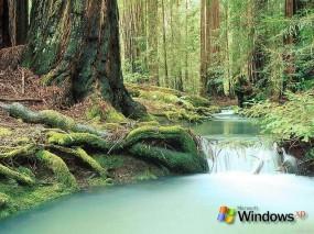 Обои ХР лес: Лес, Windows XP, Windows