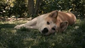 Обои Хатико: Собака, Рыжий, Фильм, Фильмы