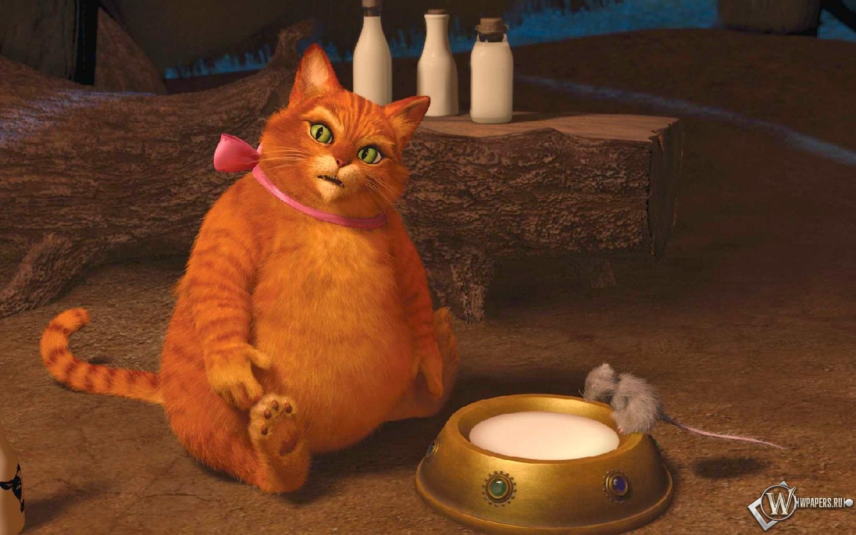 Толстый котяра из шрека 1680x1050
