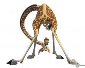 Обои Жираф из мадагаскара: Жираф, Мадагаскар, Мультфильмы