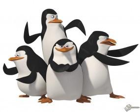 Обои Пингвины мадагаскара: Пингвины, Мадагаскар, Мультфильмы