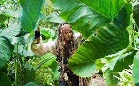 Обои пираты карибского моря: Джунгли, Джонни Депп, Джек Воробей, Пират, Пираты карибского моря