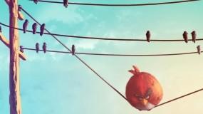 Angry Birds - Злые Птицы