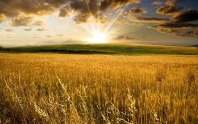 Обои Пшеничное поле на закате: Природа, Холмы, Солнце, Фото, Поле, Долина, Пейзажи, Природа
