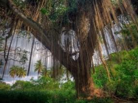 Обои Джунгли: Пальмы, Дерево, Джунгли, Растения, Природа