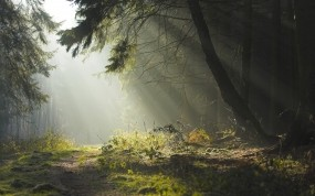 Обои Дремучий лес: Дорога, Лес, Деревья, Природа, Вечер, Лето, Утро, Природа