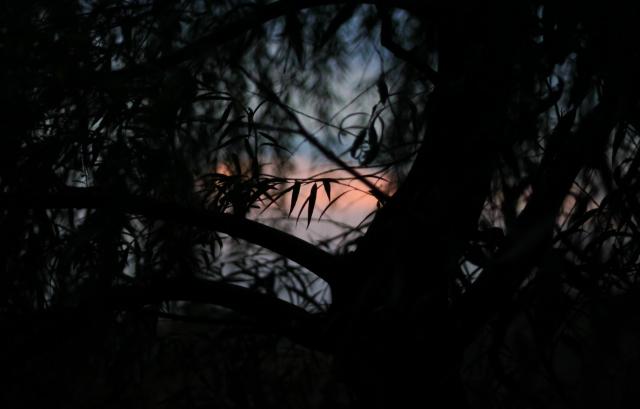 Закат в тёмных тонах