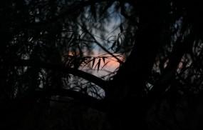 Обои Закат в тёмных тонах: Закат, Дерево, Листья, Природа