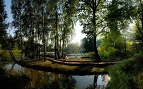 Обои Летний сад: Отражение, Вода, Деревья, Солнце, Зелёный, Природа