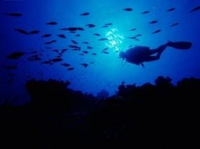 Обои Дайвинг на Багамских островах: Дайвинг, Багамские острова, Природа