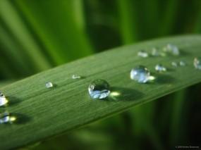Обои Капли на листе: Вода, Капли, Лист, Роса, Зелёный, Природа