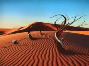 Арабская пустыня