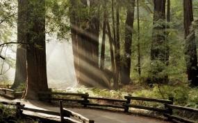 Обои Дорога в лесу: Лес, Деревья, Лучи, Ограда, Тропинка, Природа