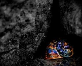 Обои Цветная ракушка: Отражение, Цвет, Ракушка, Природа