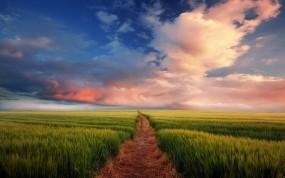 Обои Найти свой путь: Поле, Небо, Тропа, Природа
