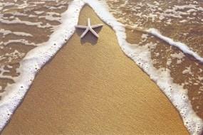 Обои Морская звезда на берегу: Вода, Песок, Берег, Звезда, Природа