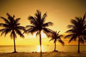 Обои Восход солнца на море: Пальмы, Море, Солнце, Восход, Природа