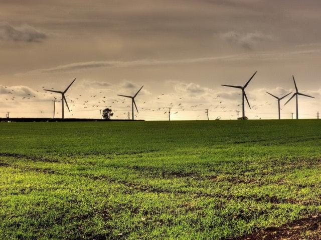 Ветряки на поле